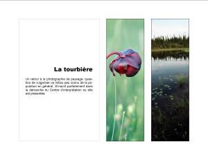11_La tourbière