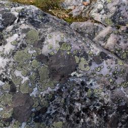 Les champignons Ne sont pas toujours comme on les imagine à l'épicerie… Ils prennent des allures de mosaïque et jouent les artistes, question d'endimancher les rochers qui n'en sont que réjouis de devenir support à la poésie...