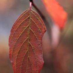 Couleurs d'automne Il y a des gens qui croient que le nord, l'automne, est drabe et sans couleur. Héhéhé...