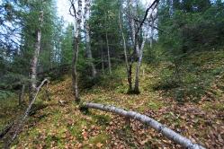Les arbres couchés depuis 40 ans.
