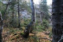 Une adolescence difficile n'empêche rien. Notre arbre pointe au sommet comme pas un...