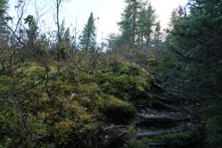 On remonte sur le plateau, la nature se fait conciliante et nous offre des marches à même ses racines...